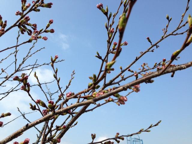 写真sakura